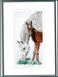 Arab Mare & Foal _ water colour painting 1st of three sketches done of middle eastern mare and foal. The breed has a distinct  broad flat back_Image =115 x 215 mm (4.33 x 8.5 inches) approx.